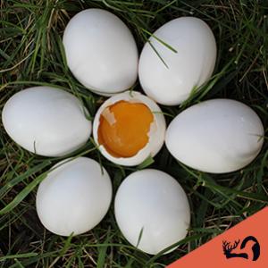 Huevos de oca